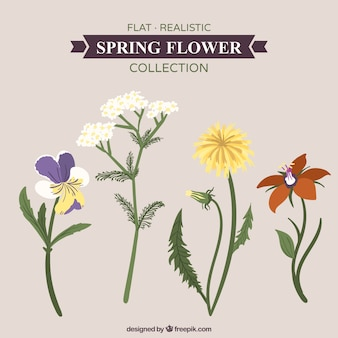 Realistic set of beautiful spring flowers