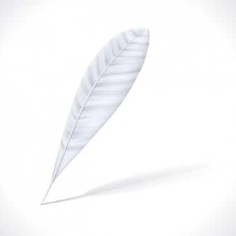 Realistic white feather