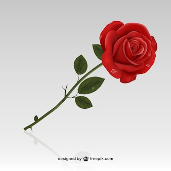 Red Rose Vectors, Photos and PSD files | Free Download