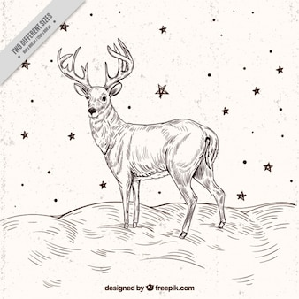 Reindeer sketch background with stars