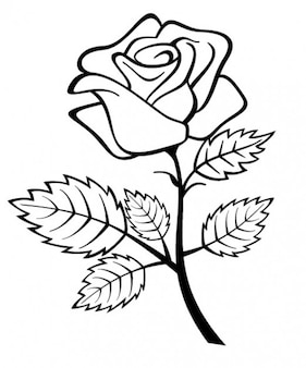 Rose flower with branch and leaves