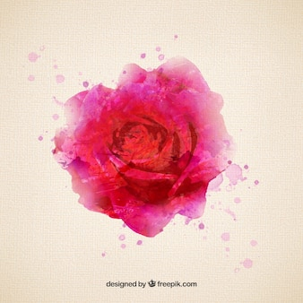 Rose in watercolor style