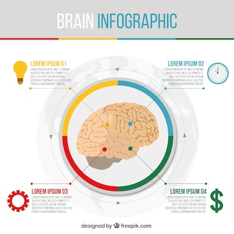 Round brain infographic template