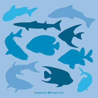Sea life silhouettes