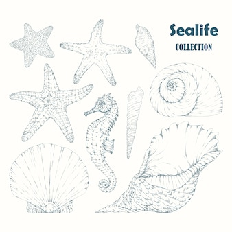 Sealife elements colletion