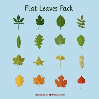 Seasonal flat leaves