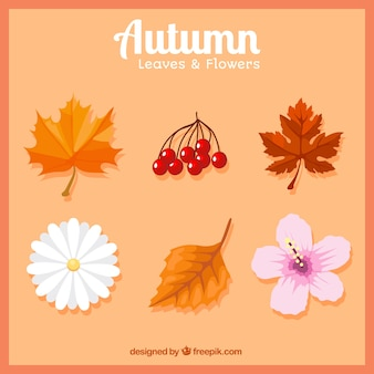 Selection of autumnal leaves and flowers