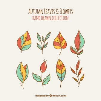 Selection of hand-drawn natural elements