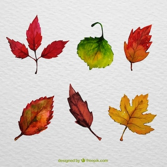 Selection of leaves painted with watercolors