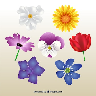 Selection of realistic flowers