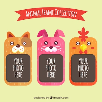 Set of animal friendly frames