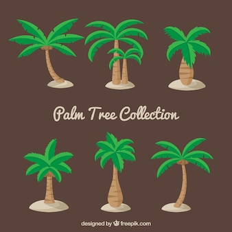 Set of beautiful palm trees