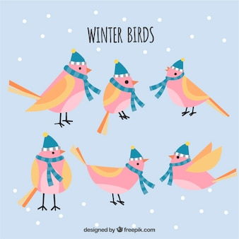 Set of birds with hat and scarf