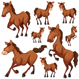 Set of brown horse in many positions illustration