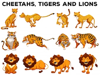 Set of cheetahs and tigers illustration