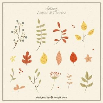 Set of colorful autumnal vegetation