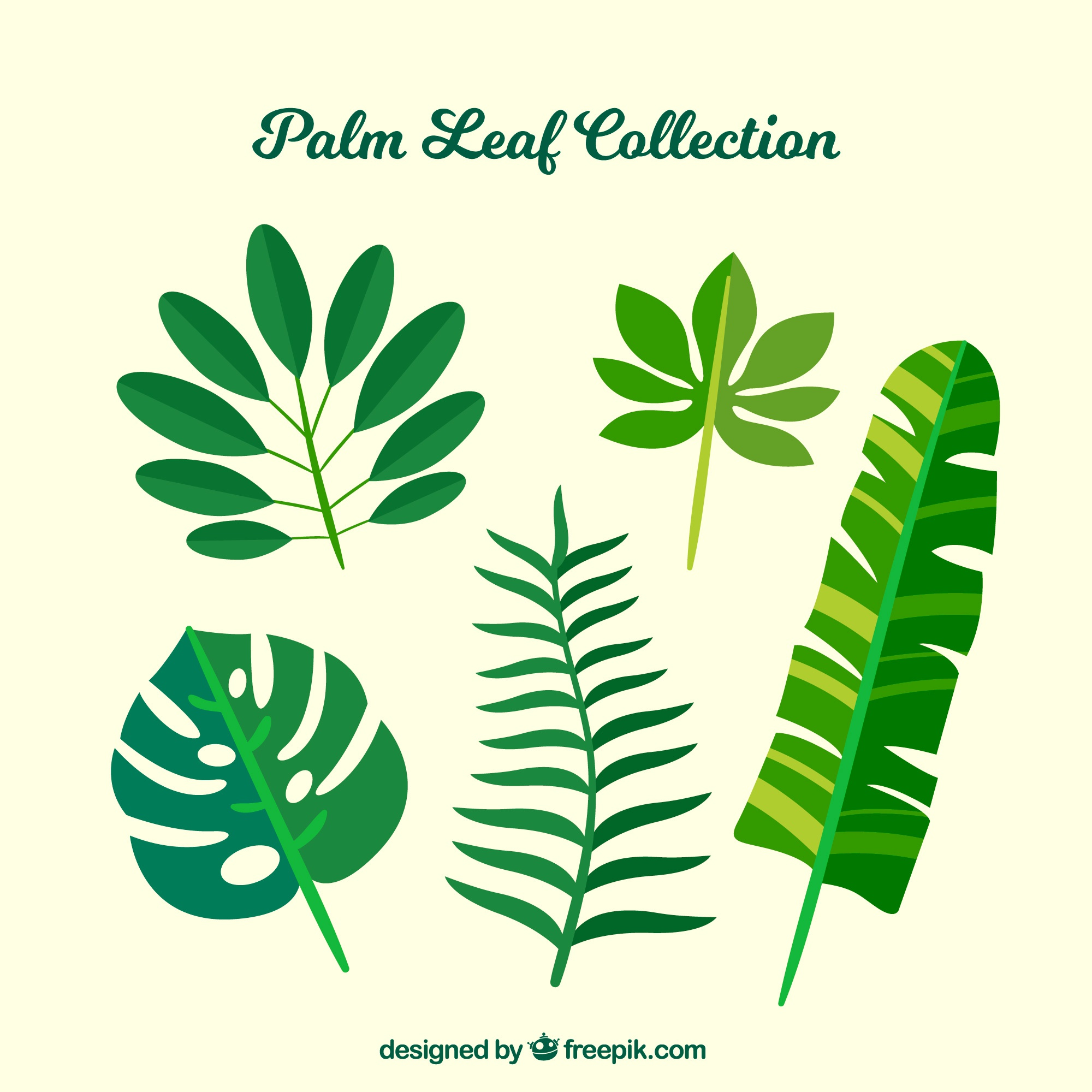 Set of five palm leaves in flat design