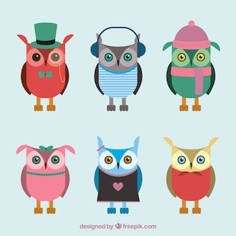 Set of flat owls with variety of accessories