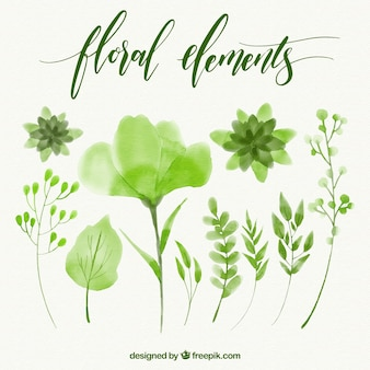Set of floral green watercolor elements