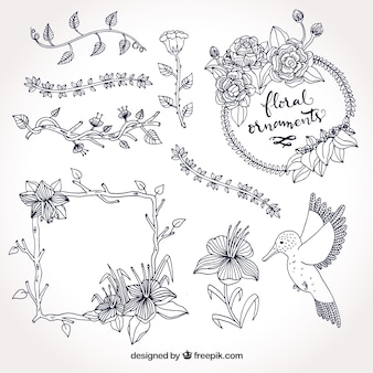 Set of frames and hand drawn natural elements