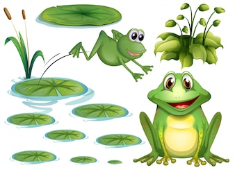 Set of green frog and water lily
