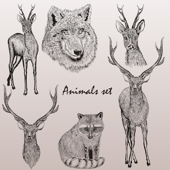 Set of hand-drawn forest animals