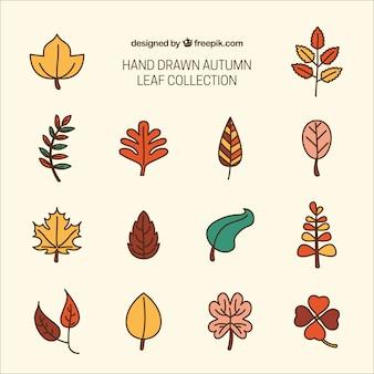 Set of hand-drawn leaves