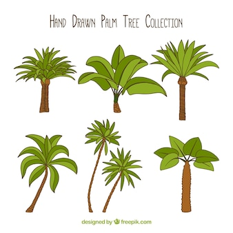 Set of hand-drawn palm trees