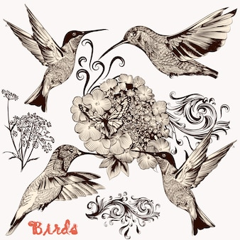 Set of hummingbird and flowers in vintage style