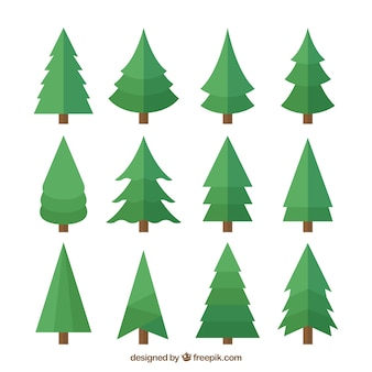 Set of pines in flat design