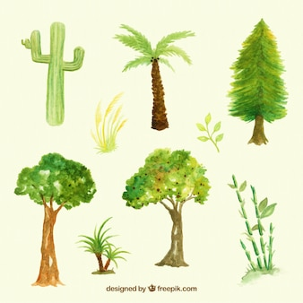 Set of tree types and watercolor plants