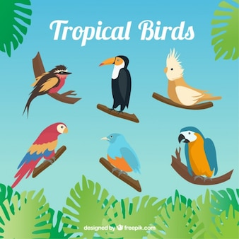 Set of variety of tropical birds