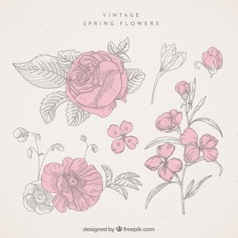 Set of vintage flower sketches
