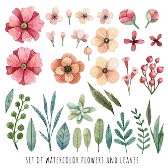 Set of watercolor flowers and leaves