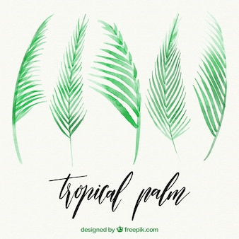 Set of watercolor palm leaves