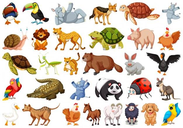 Set of wild animals