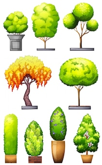 Sets of decorative plants on a white background