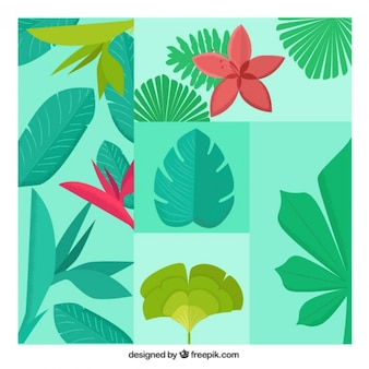 Several exotic plants and flowers