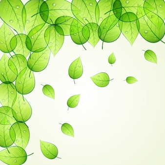 Shiny green leaves decorated background for Nature concept.