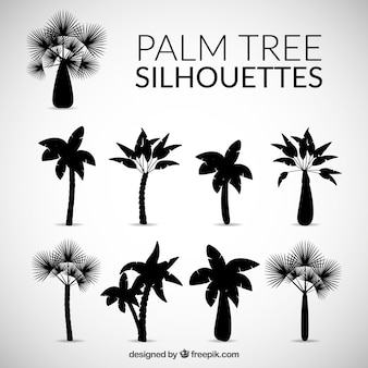Silhouettes of palm tree