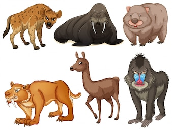 Six different kind of rare animals