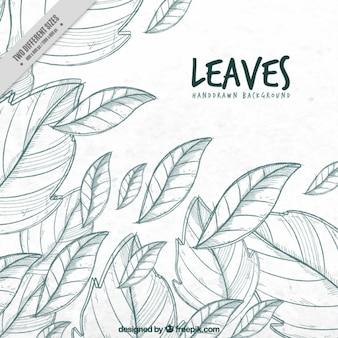 Sketched leaves background