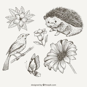Sketches cute animals and flowers