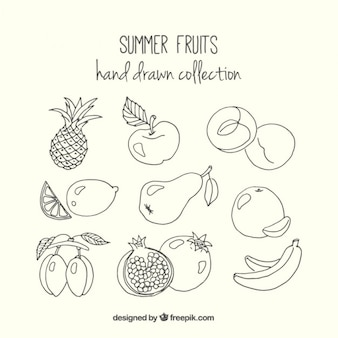Sketches delicious summer fruits