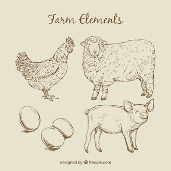 Sketches farm animals and eggs