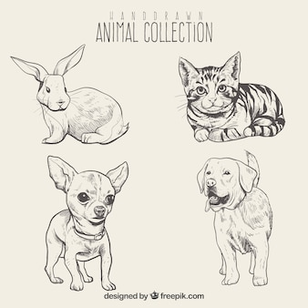 sketches of beautiful animals set
