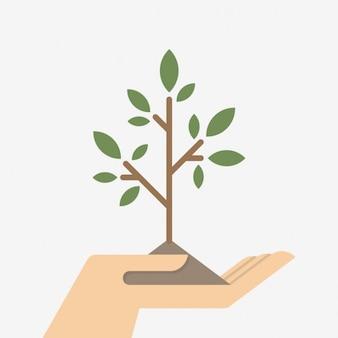 Small plant design