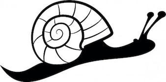 Snail side