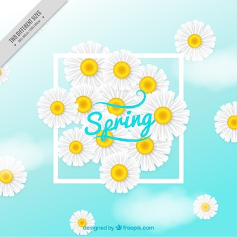 Spring background with realistic daisies
