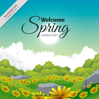 Spring landscape background with daisies